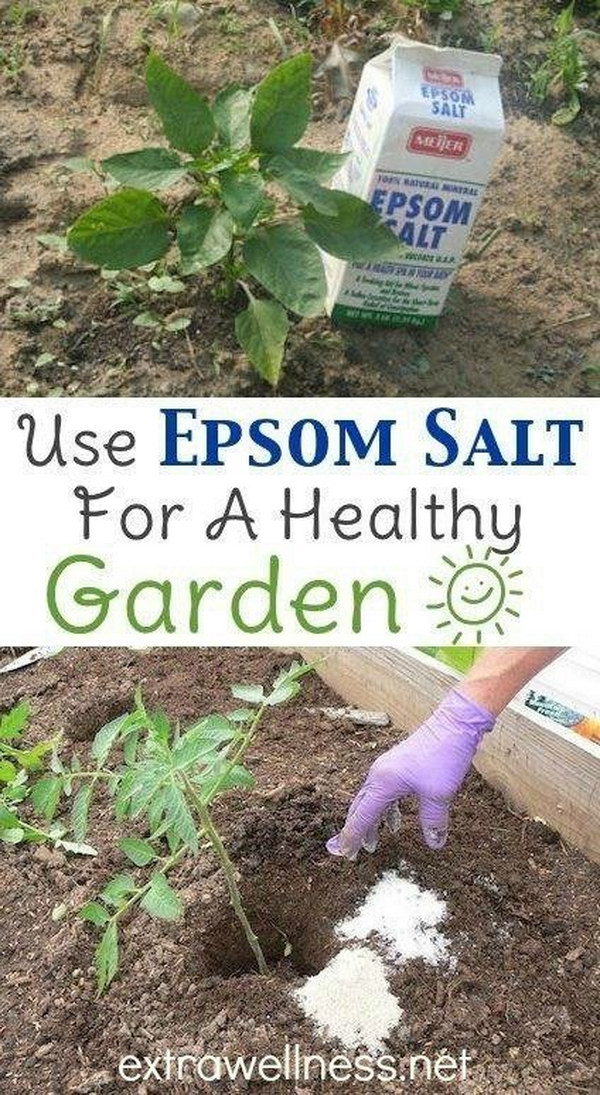 Use Epsom Salt at the Planting Stage to Aid Seed Germination.
