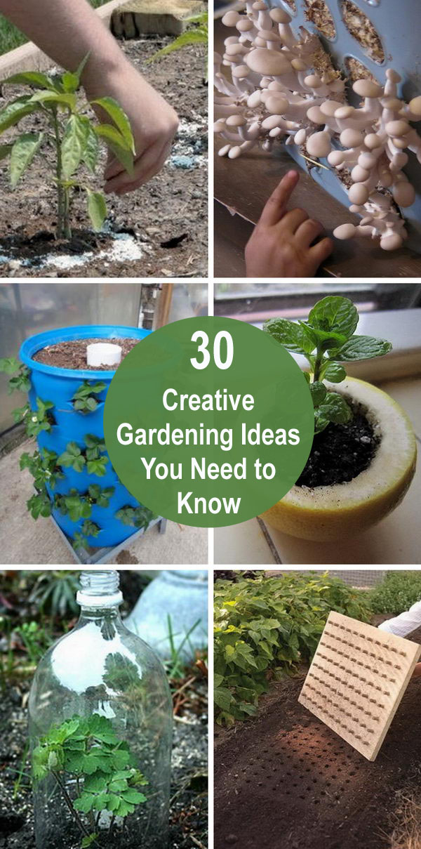 30 Creative Gardening Ideas You Need To Know.