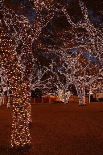 Wrap Led Christmas Lights On The Outdoor Trees.