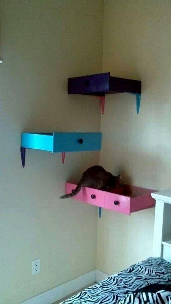 DIY Cat Shelving.