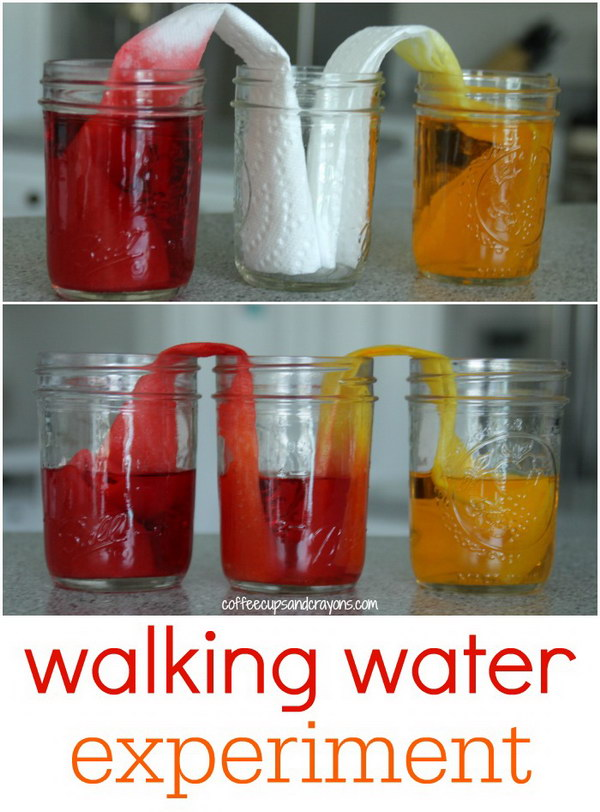 Walking Water Science Experiment for Kids.