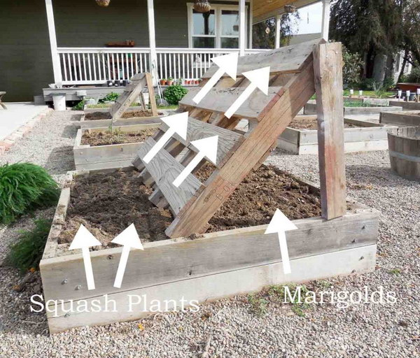 Raised Garden Bed With Squash Growing Racks Made Out Of Pallets.